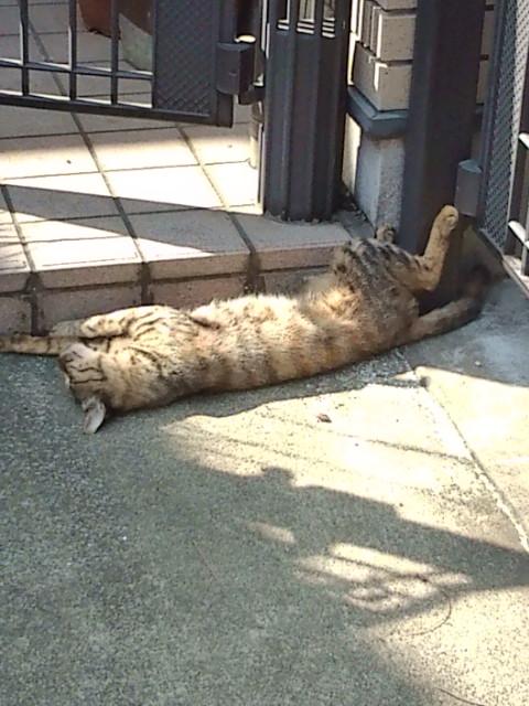 やねせん猫散策